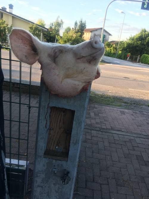 Fvg, una testa di maiale contro i richiedenti asilo