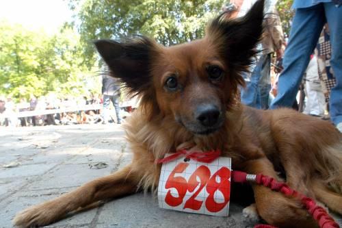 In Fiera la carica dei diecimila cani