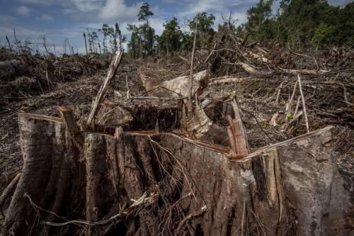 Colombia, deforestazione record in Amazzonia