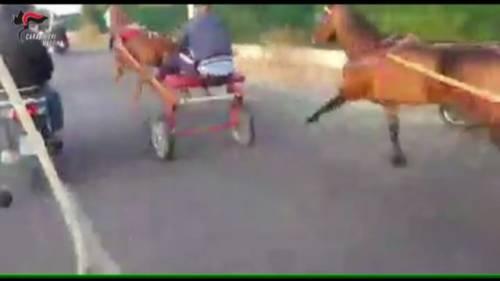 Messina, dieci condanne per le corse clandestine di cavalli