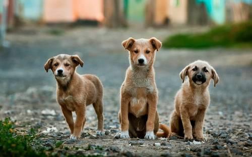 Denunciata per aver gettato cuccioli nell'immondizia