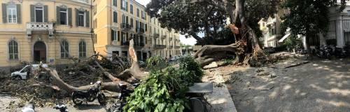 Crolla albero su Aurelia a Sanremo 2