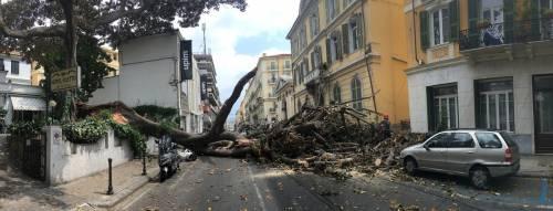 Crolla albero su Aurelia a Sanremo 3
