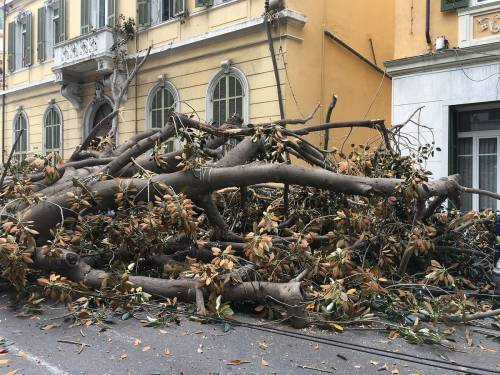 Crolla albero su Aurelia a Sanremo 4