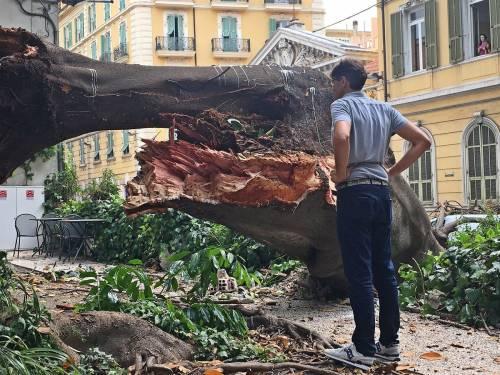 Crolla albero su Aurelia a Sanremo 6