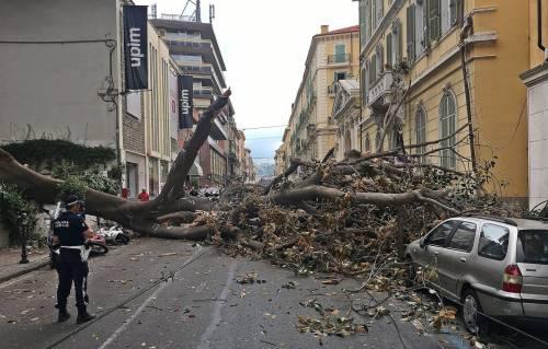 Crolla albero su Aurelia a Sanremo 8