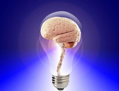 Le novità mantengono giovane il cervello