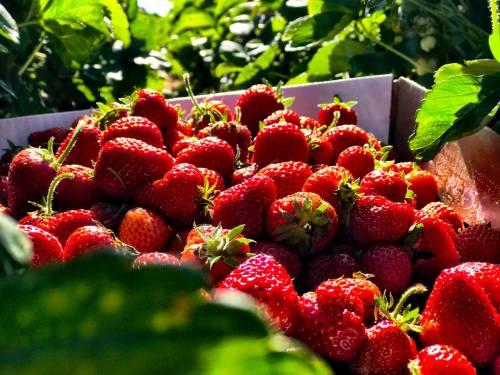 Dieta, gli alimenti che fanno bene alla pelle in estate