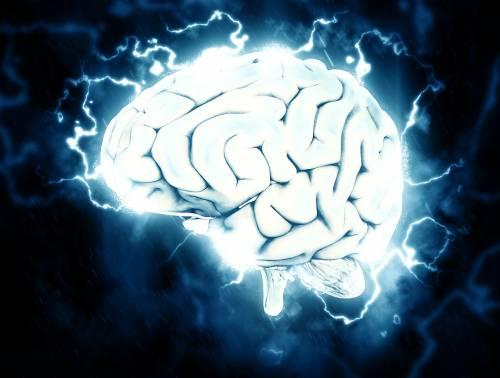 La prima mappa completa delle cellule del cervello