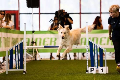 Un weekend da cani: passerella a 4 zampe tra giochi e salvataggi