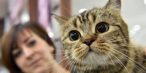 Umbria, ospedali aperti a pet therapy: animali assisteranno i padroni