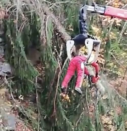 Belluno, la fake dell'uomo che taglia gli alberi in condizioni estreme