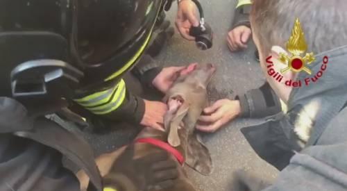 Un cane salvato con le bombole d'ossigeno