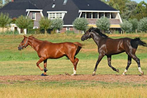 Anche i cavalli soffrono lo stress