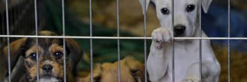 Nardò, cani adottati dalle famiglie per combattere il randagismo