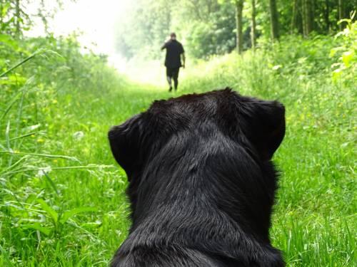 Cane insegue il proprietario dopo essere stato abbandonato
