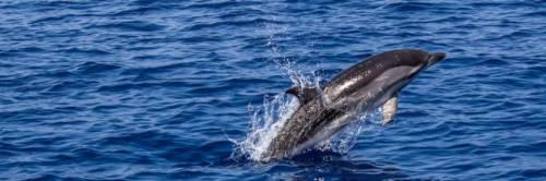 Salento, due delfini morti sulle spiagge di Porto Cesareo