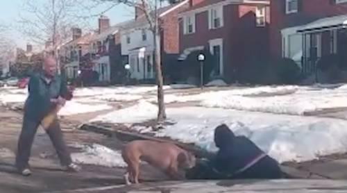 Pitbull azzanna il postino: l'uomo viene salvato dal coraggio dei passanti