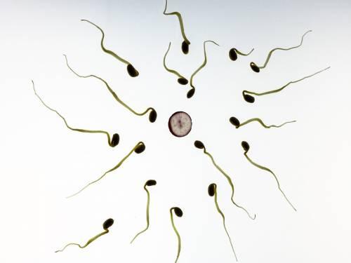L'orologio biologico non è una prerogativa solo femminile