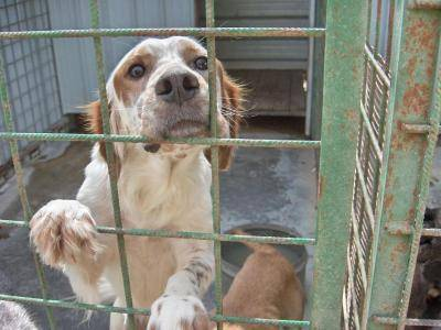 Avellino, scoperto e sequestrato canile abusivo con 50 animali denutriti
