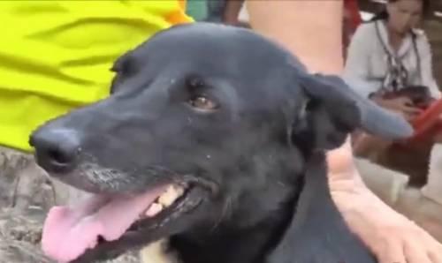 Thailandia, cane disabile salva il neonato sepolto vivo dalla madre 15enne
