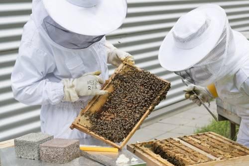 Milano invasa dalle api. Almeno tre interventi in un solo giorno