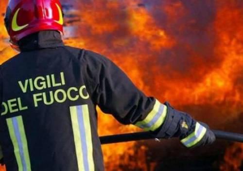 Orrore nel Palermitano, cane legato e bruciato vivo