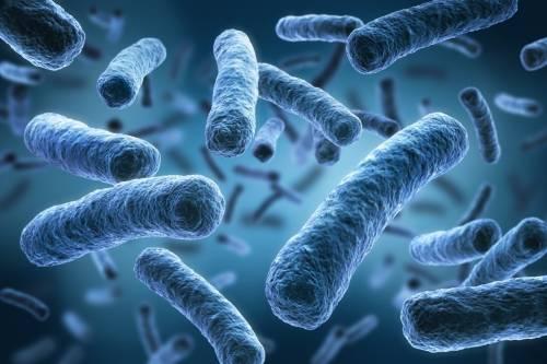 Creato il batterio artificiale: è inattaccabile dai virus