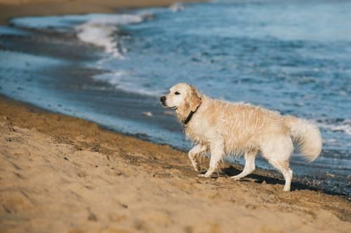 """Cani in spiaggia, il Tar: """"I Comuni non possono vietare l'accesso ai lidi"""""""