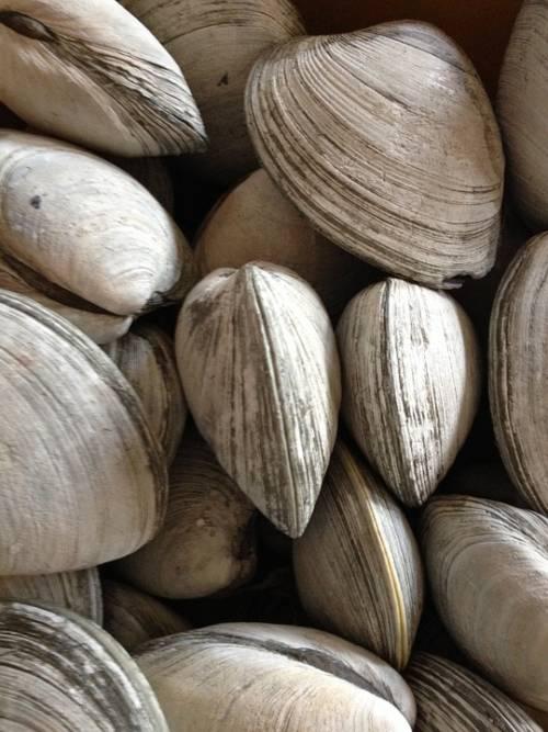 Maxi sequestro di vongole pericolose per la salute: denunciati cinque pescatori