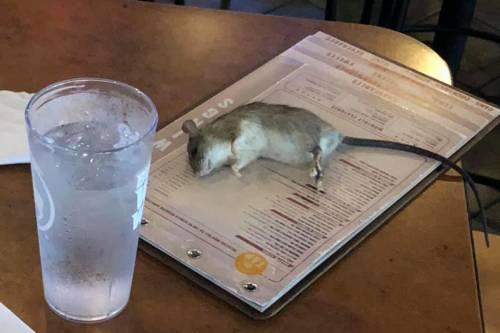Un topo precipita dal soffitto sul tavolo di un ristorante