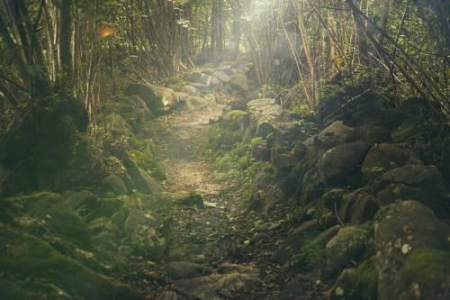 Curare l'ansia e lo stress con Il Bagno di Foresta