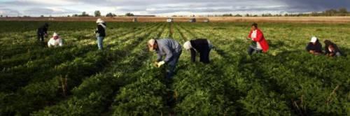 Lecce, in manette imprenditore agricolo: sfruttava braccianti tunisini