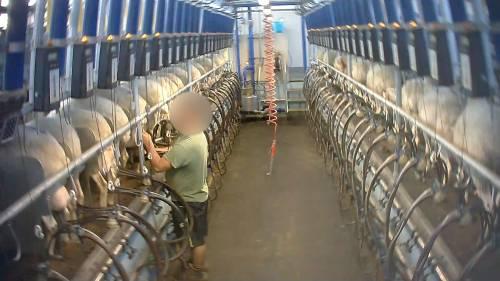 Violenze sugli animali nell'allevamento più grande d'Italia 6