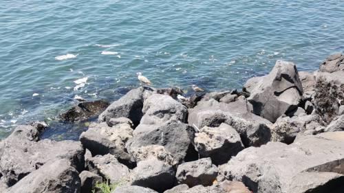 Napoli, il mare negato di San Giovanni a Teduccio 8