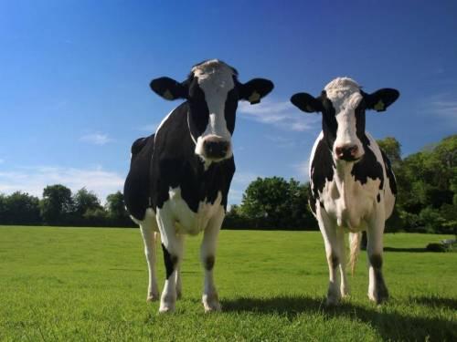 Germania, l'idea della sinistra per ridurre l'inquinamento: tasse più alte sulla carne