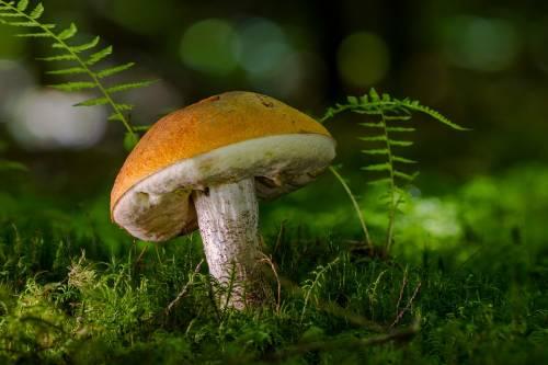 Funghi, intera famiglia all'ospedale per indigestione di funghi