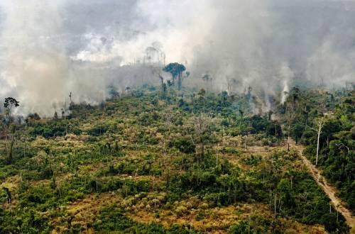 """Il ruolo """"nascosto"""" della Cina nella deforestazione in Amazzonia"""