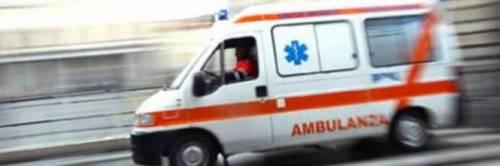 Milano, studenti attaccati da uno sciame di vespe: sette di loro finiscono in ospedale