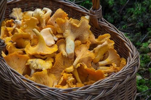 Funghi, mangiarli riduce i rischi di cancro alla prostata