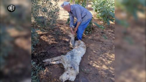 Cane ucciso a badilate e cosparso di benzina. Denunciato contadino