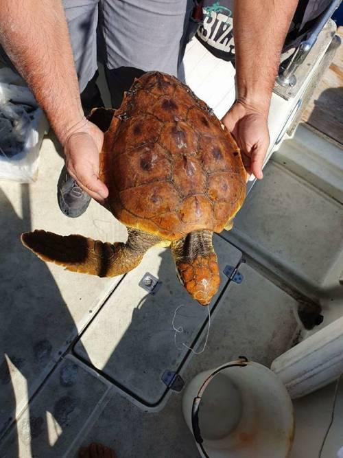 Napoli, salvata tartaruga che aveva ingerito un amo 4