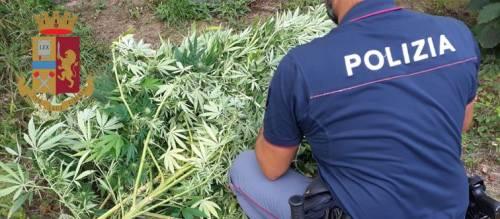 """Armi e droga: sequestrate 130 piante di marijuana """"skunk"""" e 4 fucili"""