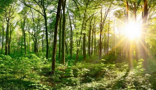 """L'ecologismo """"umano"""" è frutto del progresso"""
