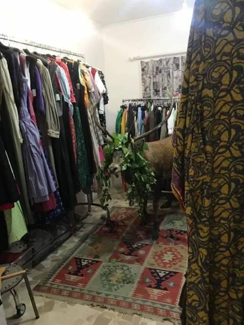 Cortina, il cervo si perde e si barrica nel negozio