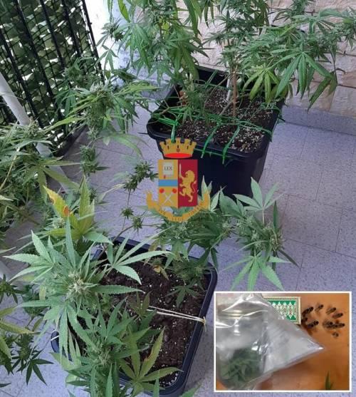 Piante di marijuana sul balcone: denunciato 36enne