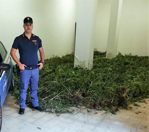 Palermo, scoperta una vasta piantagione di marijuana in una contrada di Misilmeri