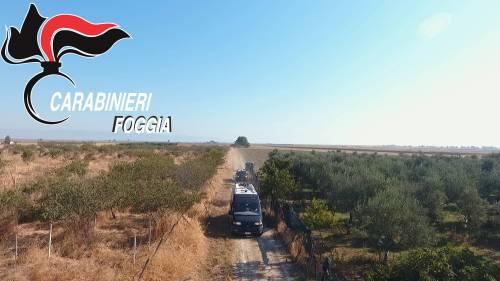Manfredonia, coltivava marijuana: rumeno arrestato 3