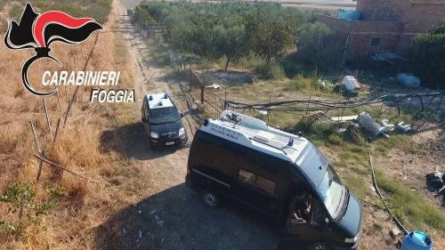 Manfredonia, scovata piantagione di marijuana: arrestato rumeno