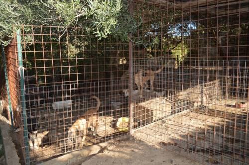 Canile Lager alle porte di Roma con 65 cani detenuti illegalmente